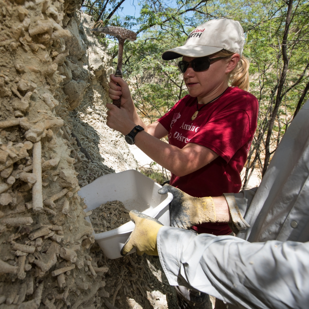 Dillon collects bulk sediment samples from a fossil reef in the Dominican Republic