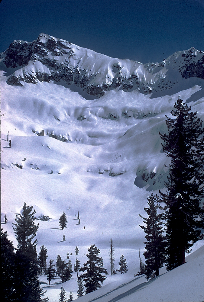 A snow-covered slope with conifers in the foreground.