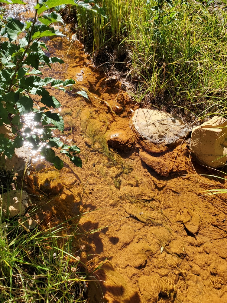 A creek bottom coated in brown iron oxide with plants growing on its banks