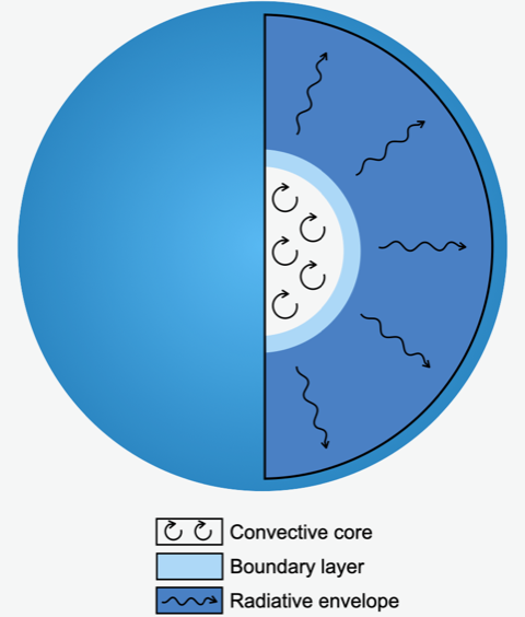 A cross-sectional diagram of the mixing within a massive star