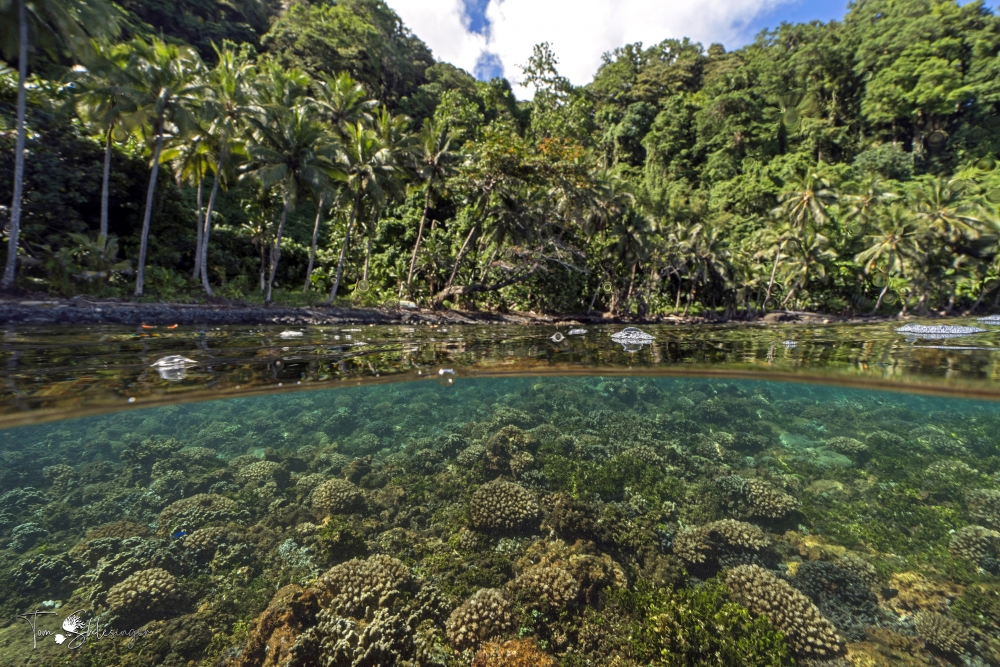 Jungle grows to the water's edge, where below the surface lies a coral reef.