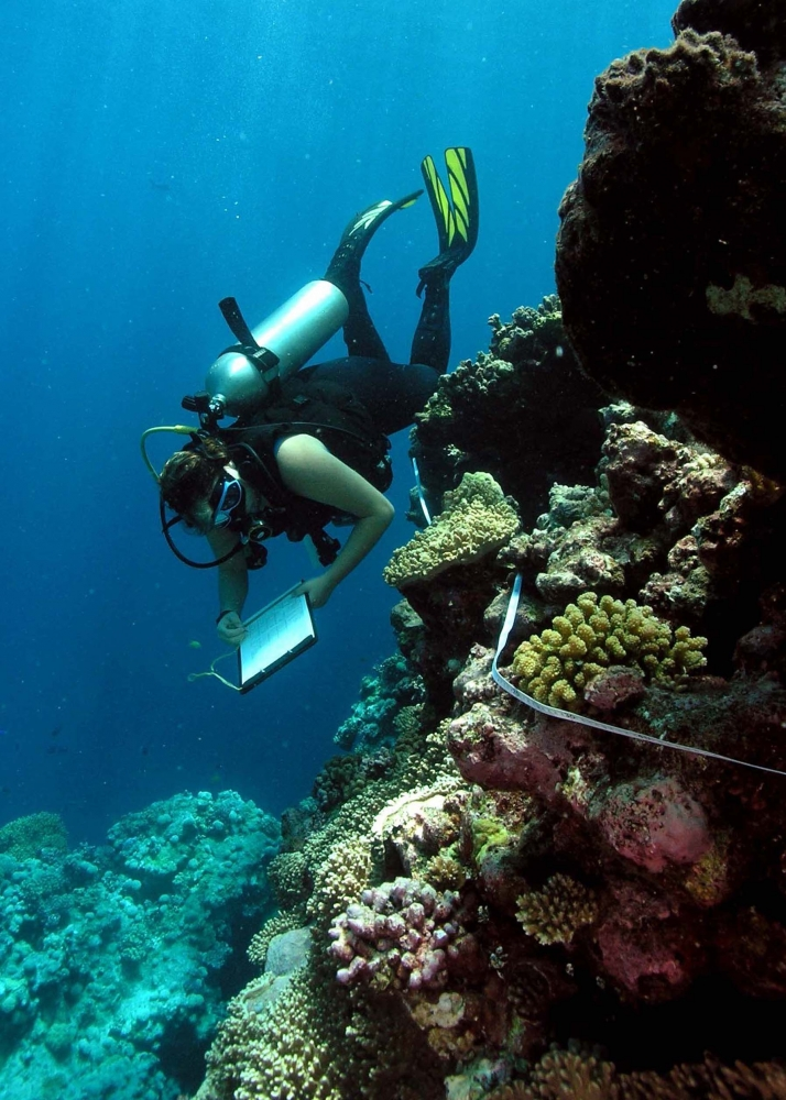 An EcoDiver searches for invertebrates on the Great Barrier Reef