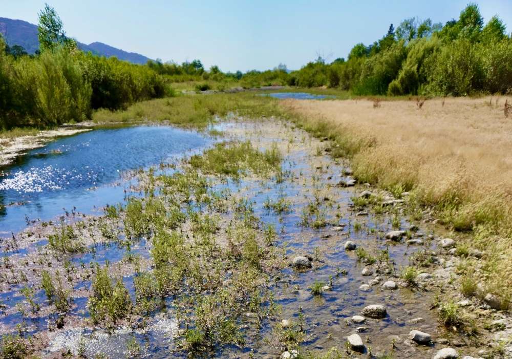 The sun shines down on a shallow marshy stretch of river bordered by grasses and riparian shrubs. Mountains are visible off to the left against a clear blue sky.