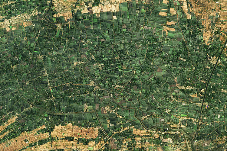 A satellite image of green aquaculture ponds in the Indian state of Andhra Pradesh