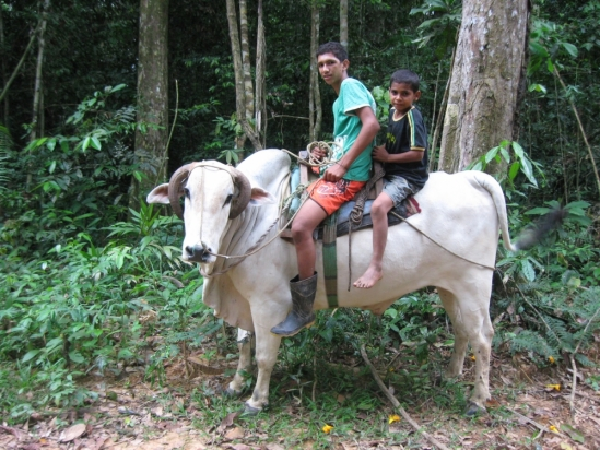 Jeffrey Hoelle studies culture of cattle raising in the Amazon