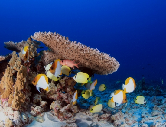 Coral reef off Pearl and Hermes Atoll