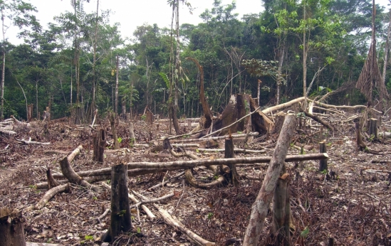 Slash and burn agriculture in the Amazon