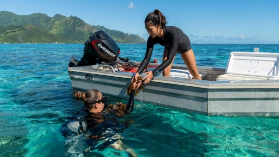 Mo'orea Coral Reef: Research in Paradise