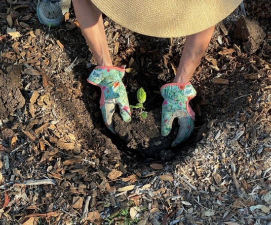 A person lowers a seedling into a hole in the ground.