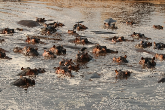 Hippos and Anthrax