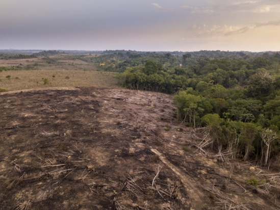 Illegal deforestation in the Amazon