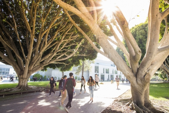 Students walk through trees in the sunlight on UCSB campus