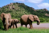 Elephants at a watering hole at Mpala Research Centre in Laikipia County, Kenya