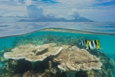 over/under water shot of fish and corals facing Moorea