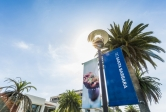 Looking up at a blue UCSB banner hanging from a lightpole as sun comes through palm trees