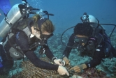 research divers at Moorea