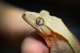 closeup photo of gecko