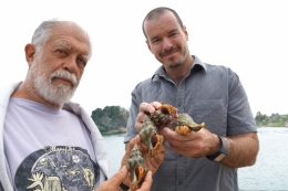 photo of UCSB parasitologists Armand Kuris and Ryan Hechinger, with Kellet's whelks