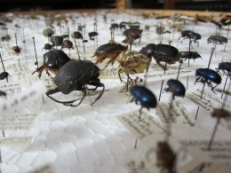 Close up of bug collection in NRS Archive