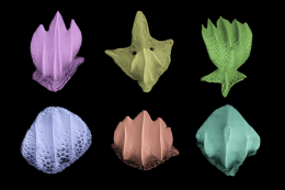 False color electron microscope images of denticles