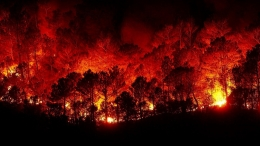 Forest fires, climate change