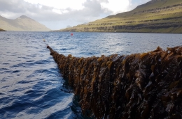 A line of seaweed is drawn from the water