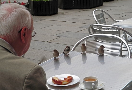 Breakfast with sparrows