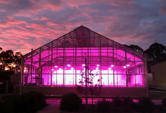 LED lighting at UCSB greenhouse