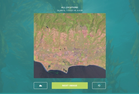 Giant kelp satellite image
