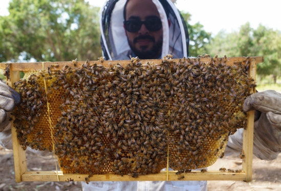 Nestor Covarrubias and bee frame