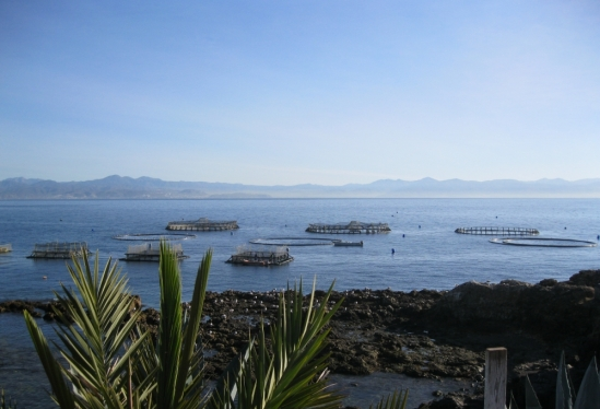 View of aquaculture pens from shore