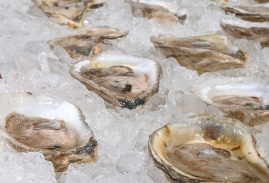 Farmed Maine oysters