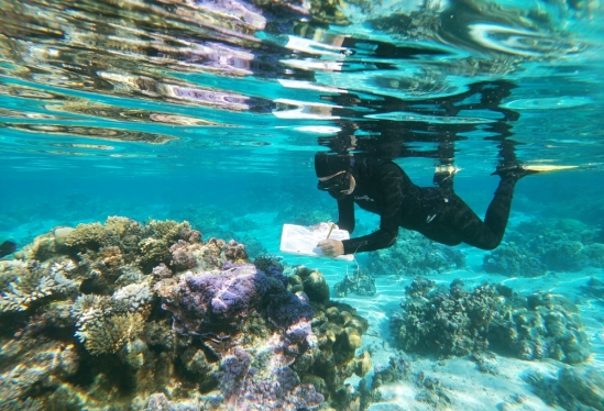 Schmidt Fellow Kelly Speare conducting research at UC Gump Station in Moorea