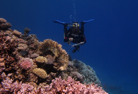 A Reef Check EcoDiver conducts a substrate survey.