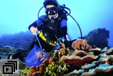 Scuba diving on Palmyra