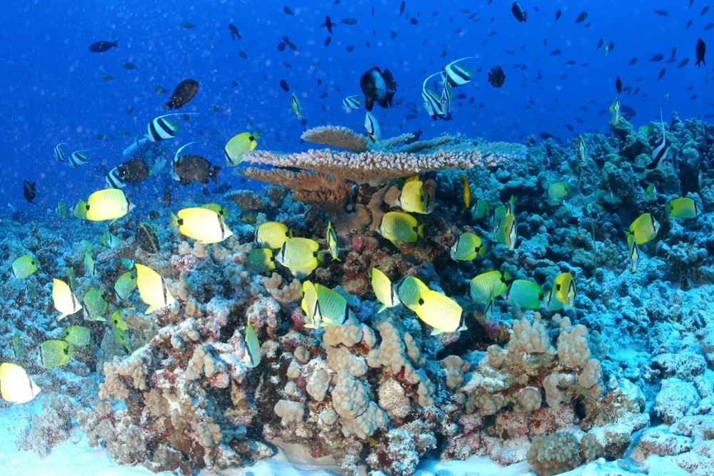 """coral reefs supports diverse marine life and animals Marine life support  of the sea,"""" coral reefs are some of the most diverse ecosystems on earth  to countless marine animals, coral reefs are very important ."""