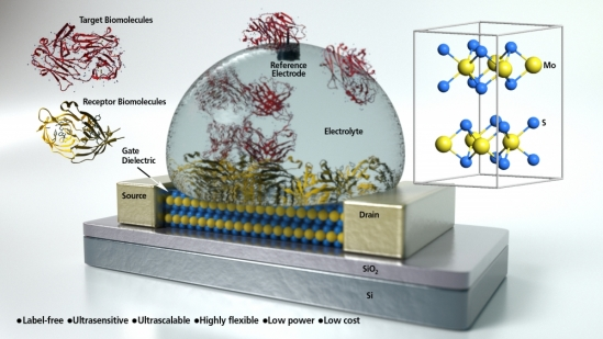 Concept art of a molybdenum disulphide field-effect transistor based biosensor
