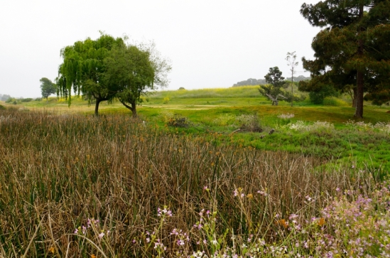 UCSB poised to begin North Campus Open Space Restoration Project