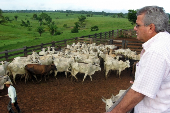 A cattle rancher in Acre, Brazil, looks out over his herd.