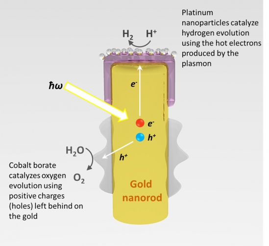 The process by which light is captured by the gold nanorod, and converted into energy that can spilt water (H2O) into hydrogen and oxygen.