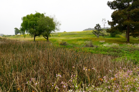 The golf course in the background will be restored to its natural state.
