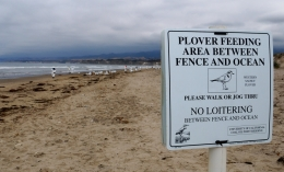 Plover signage at Coal Oil Point