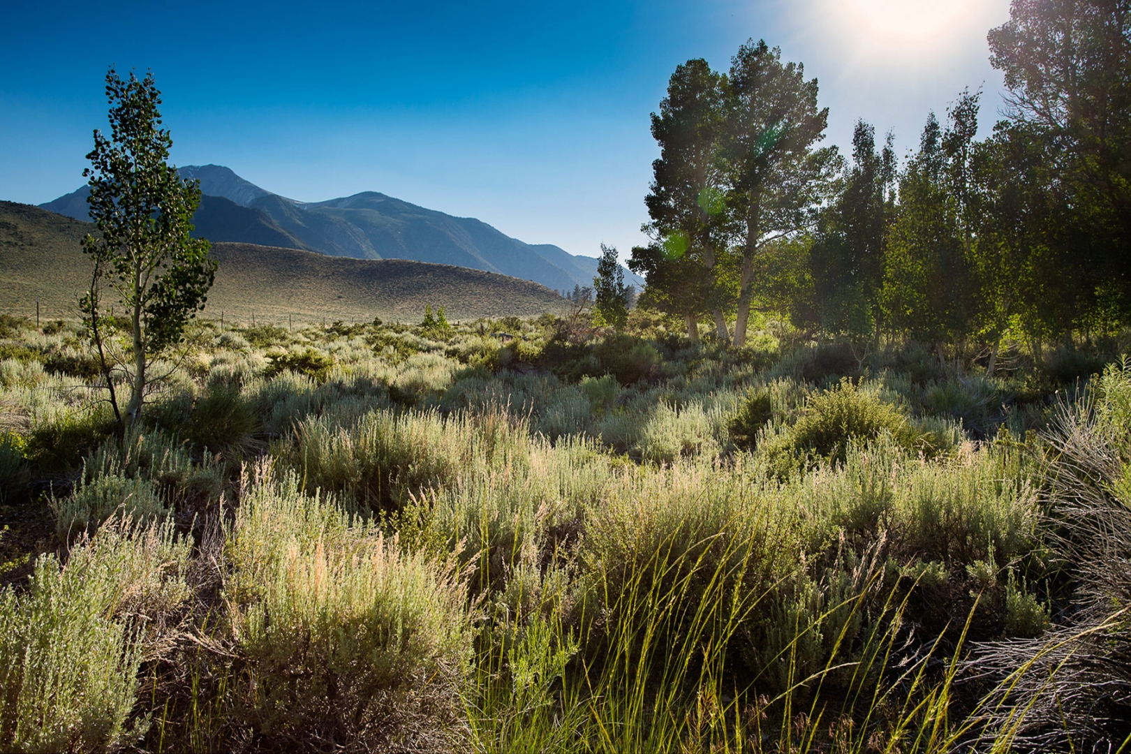 Sagebrush, aspen and pine forest provide a lush ecosystem throughout the SNARL property
