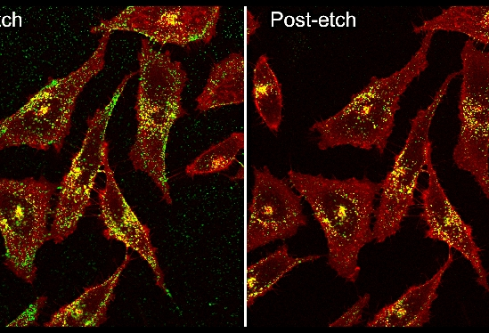 pre- and post-etch cancer cells