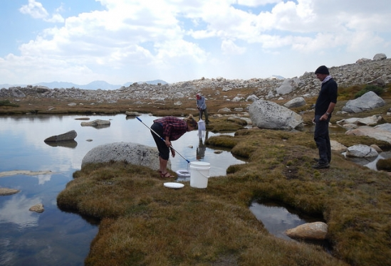Biologists collecting tadpoles