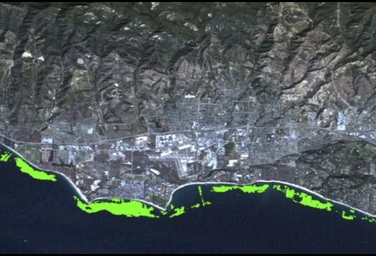 Satellite image of kelp canopy