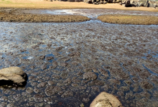 dung-filled hippo pool