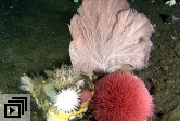 Deep-water corals