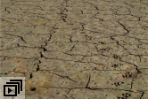 Drought-Temperature Study