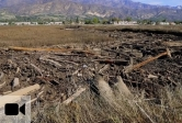 Carpinteria Salt Marsh Reserve filled with debris after January 9, 2018 mudslide